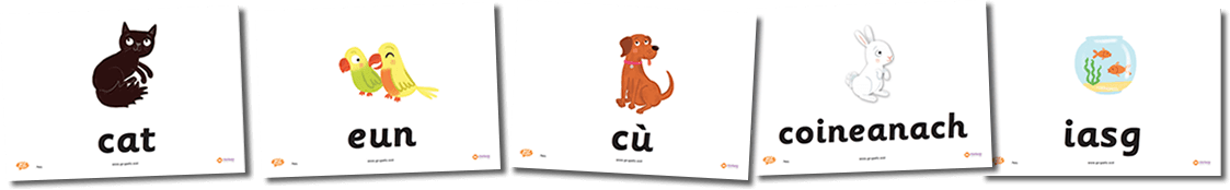 Pets Flashcards